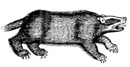 Topsell's Badger